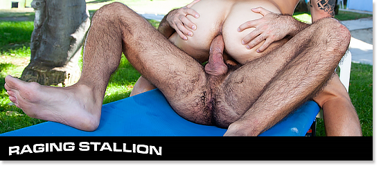Banner-Raging Stallion